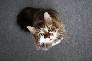 kitty-junior team member